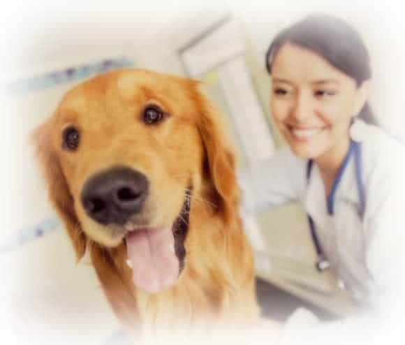 Vet Nurse Training and Course - become a vet nurse