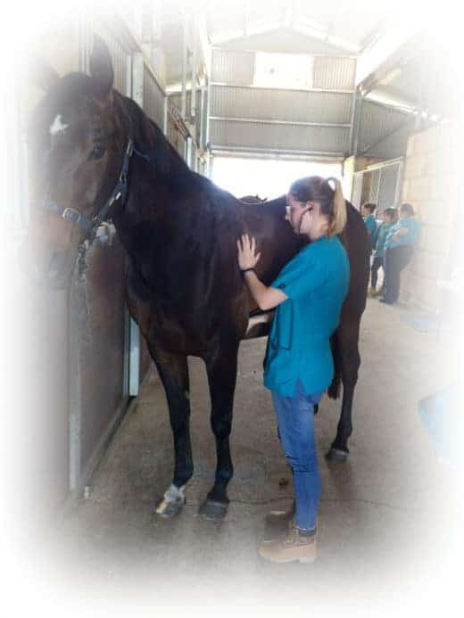 Vet Nursing Course - Equine and horse care Perth