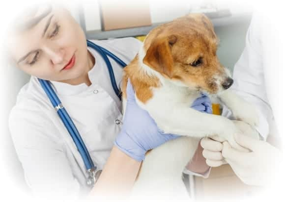 Animal Care jobs - vet nurse