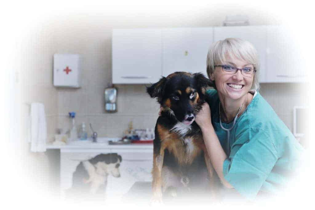 Working in a vet practice and learning vet nursing