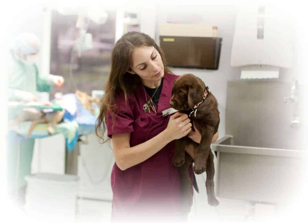 Veterinary Nurse Australia - training options