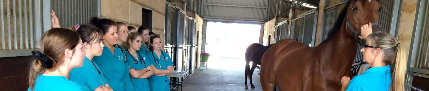 Horse and Equine Care Course - Run in WA Perth