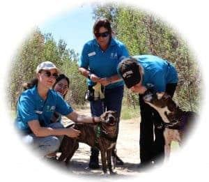ACM20117 Cert II in Animal Studies Intensive Course in Perth