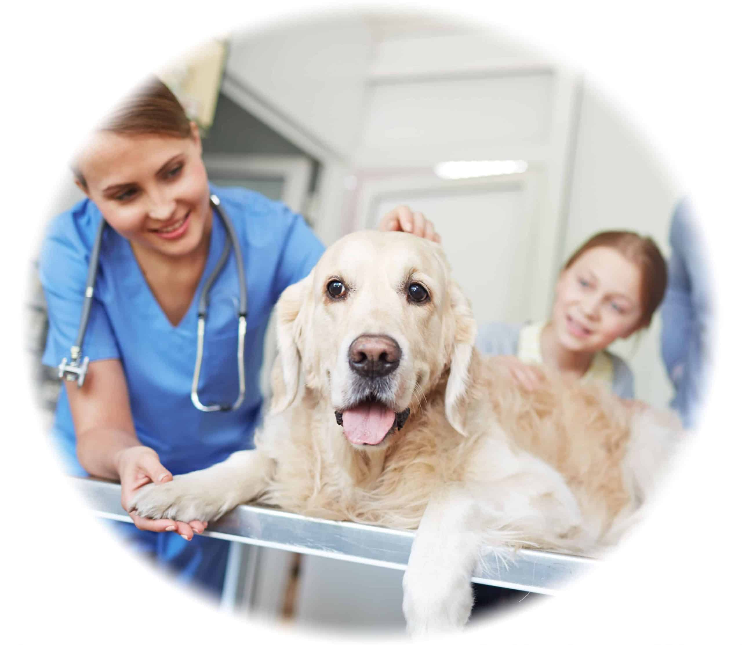 Online and Perth On-campus Vet Nurse School