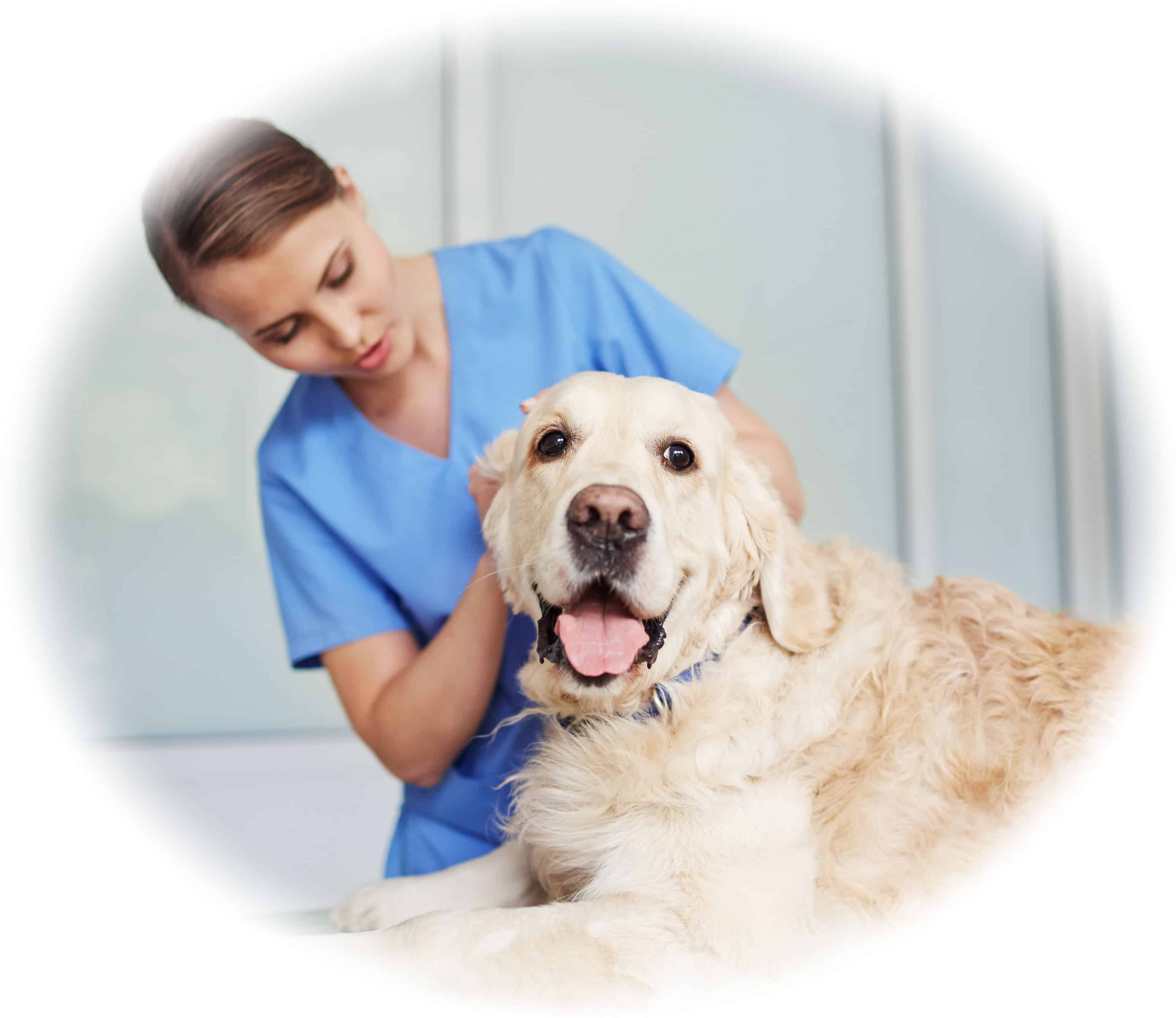 Entry requirements and prerequisite for Veterinary Nurse Course