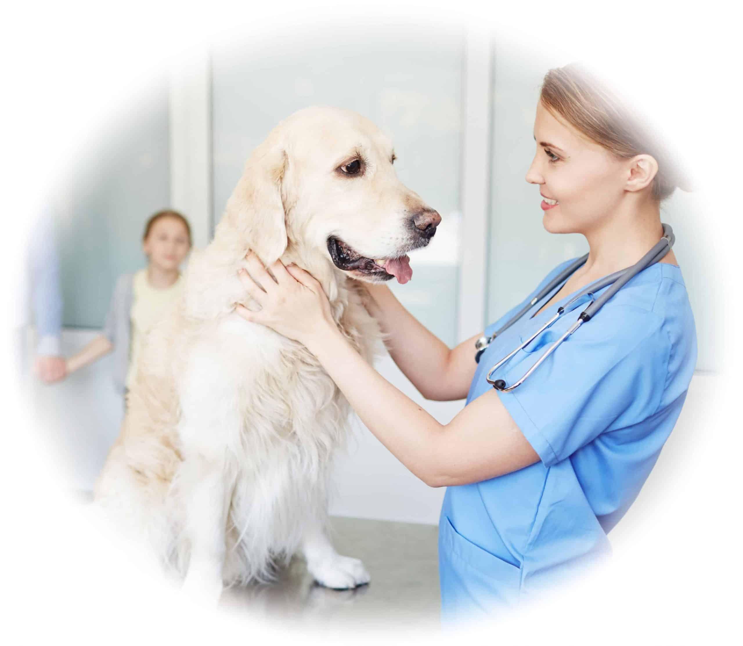 Vet Nurse School - become a vet nurse