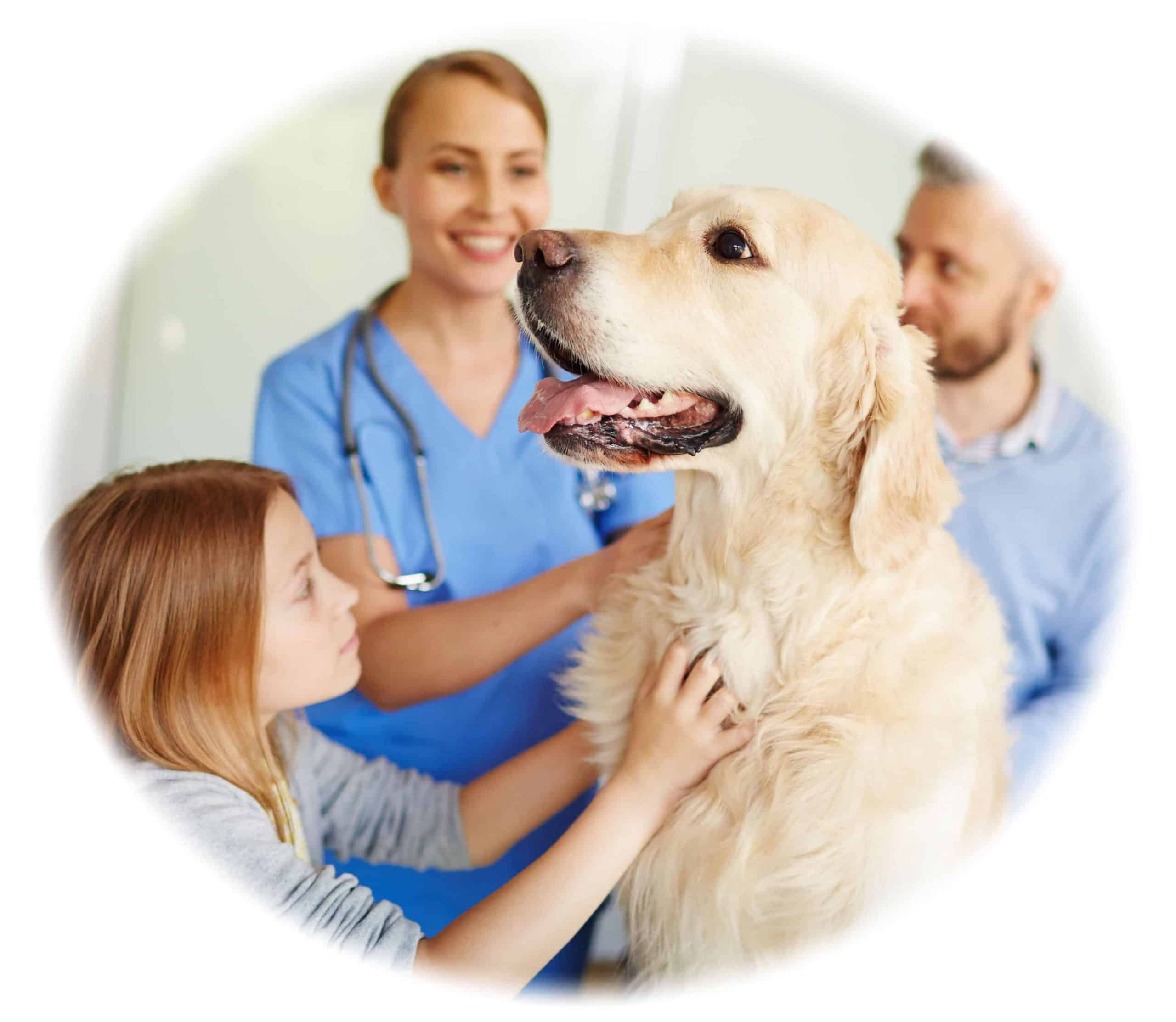 Vet Nurse Training and Course - become a vet nurse