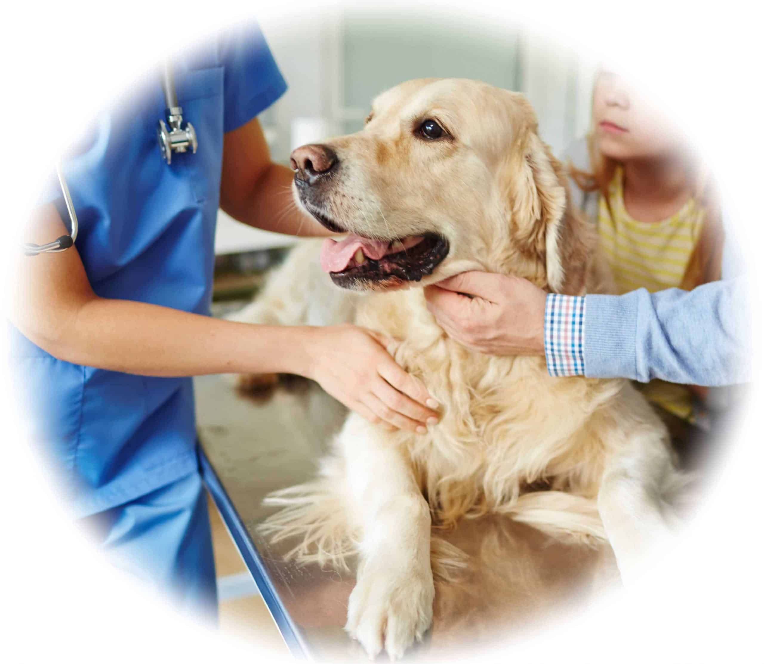 Job and Skills Outcomes for Veterinary Nurse Students