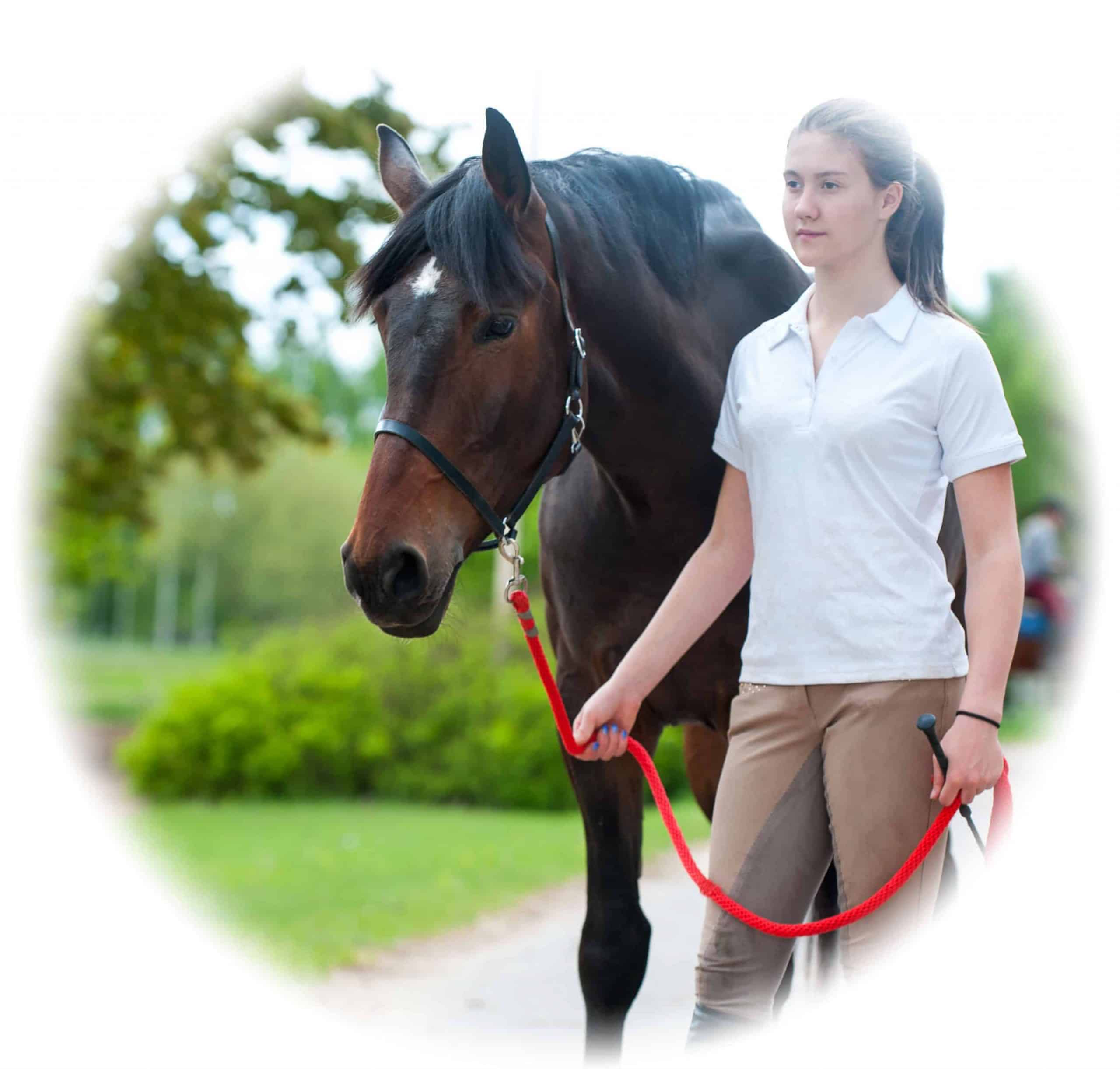 Horse care qualification - training and skills