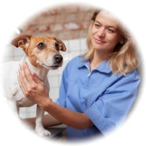 Veterinary Assistant Pay and Salary in Australia