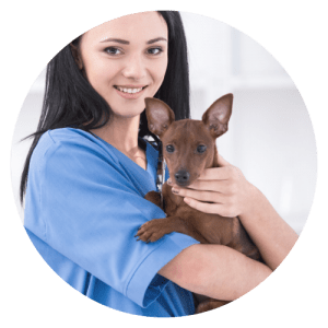 Study our prerequisite for veterinary nursing