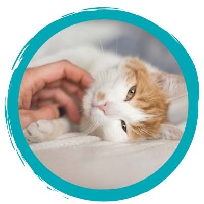 Animal Welfare Course based in Perth