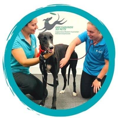 Greyhounds as Pets - Animal Care course