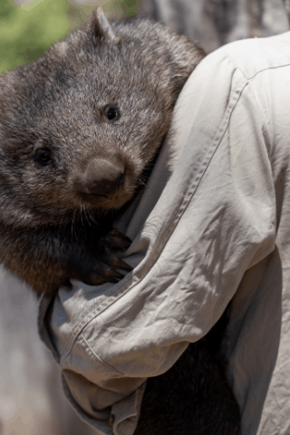 How to get a job in a zoo in Australia