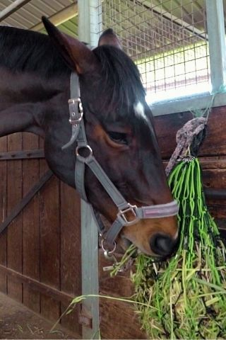 owning a horse for beginners - how to look after your horse