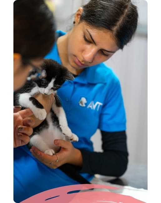 Course in animal welfare and care