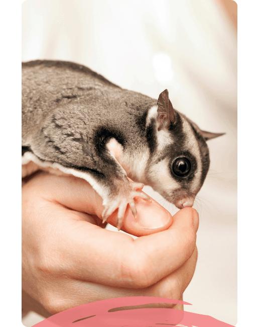 Animal Rehabilitation Course - Captive animals and wildlife course