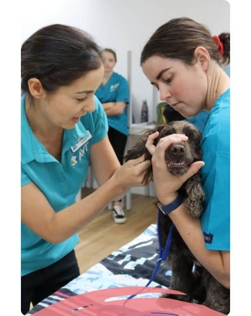 Become a Veterinary Nurse - course and qualification outline