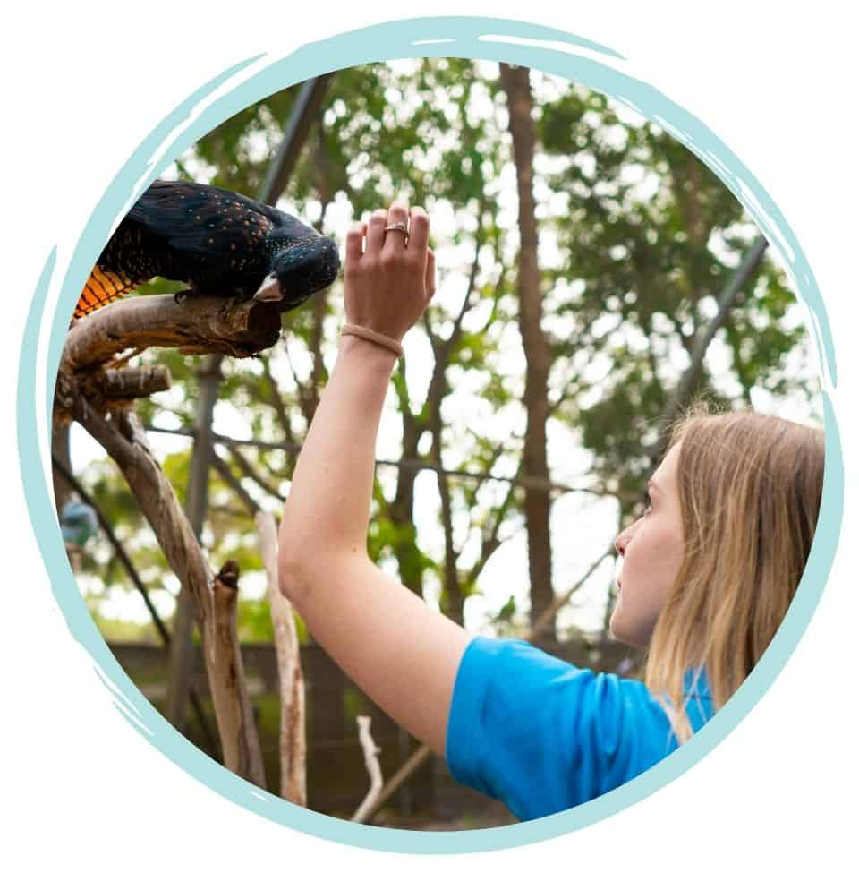 Cert 3 in Animal Care - online course bird