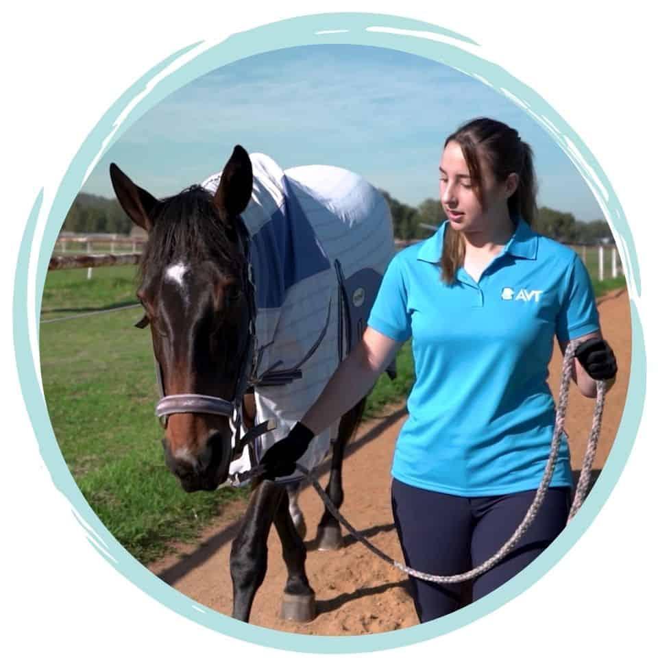 Equine and Horse care qualification - online course Australia